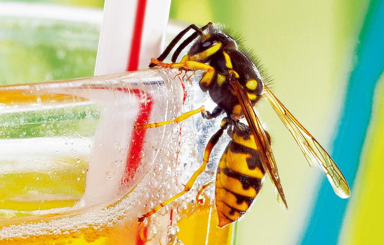 Was tun gegen Insektenstiche – Magazin SCHULE ONLINE