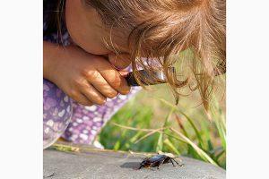 Lebewesen untersuchen – Offline-Ferien – Magazin SCHULE ONLINE